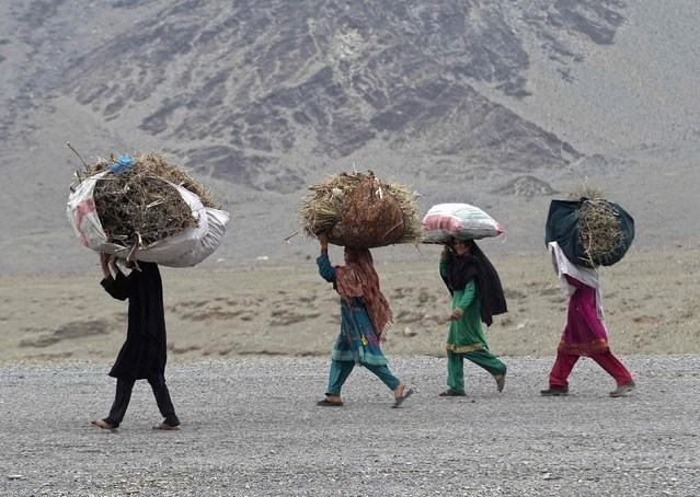 Afghan girls carry dried shrubs, for fuel and heating, on their heads on the outskirts of Jalalabad, February 1, 2015. (Photo by Reuters/Parwiz)