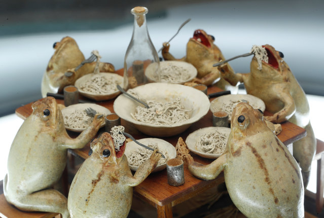 Frogs eating a family dinner at the Frog Museum, a collection of 108 stuffed frogs in scenes portraying everyday life in the 19th-century and made by Francois Perrier, in Estavayer-le-Lac, Switzerland on November 7, 2018. (Photo by Denis Balibouse/Reuters)