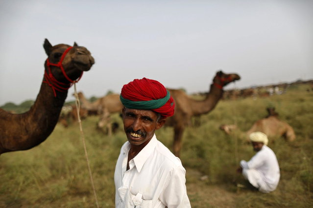 A camel trader wearing traditional headgear looks on as he holds his camel at Pushkar Fair in the desert Indian state of Rajasthan November 9, 2013. Many international and domestic tourists throng to Pushkar to witness one of the most colourful and popular fairs in India. Thousands of animals, mainly camels, are brought to the fair to be sold and traded. (Photo by Ahmad Masood/Reuters)