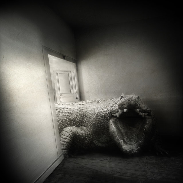 """""""Did you have a good night?"""" (Photo and caption by Yves Lecoq)"""