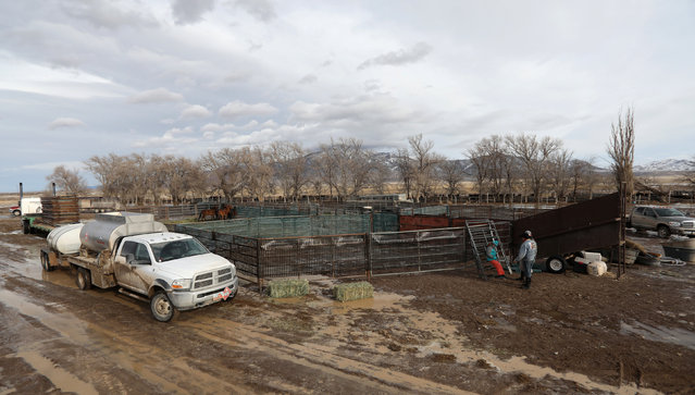 A temporary corral is seen in the Wah Wah Valley where wild horses were sorted after being herded during a Bureau of Land Management round-up outside Milford, Utah, U.S., January 8, 2017. (Photo by Jim Urquhart/Reuters)