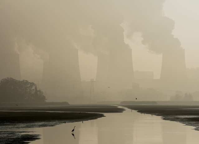 The cooling towers of the brown coal power station Jänschwalde of LEAG (Lausitz Energieberbau AG) are pictured in Peitz, eastern Germany on a foggy October 27, 2016. (Photo by Patrick Pleul/AFP Photo/DPA)