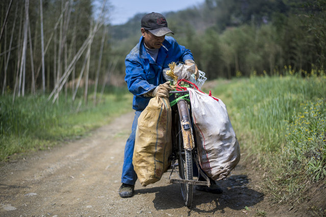 This picture taken on April 12, 2017 shows Xu Weifu attaching two bags of bamboo to his bicycle to transport it to the market in Taihuyuan near the city of Lin'an, Zhejiang Province. (Photo by Johannes Eisele/AFP Photo)