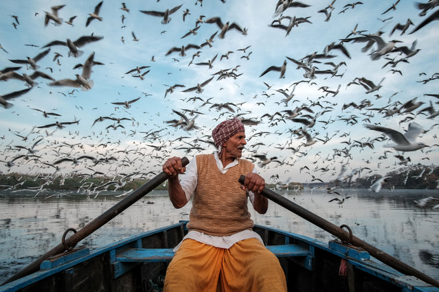 On the river Yamuna, Mr Ramnath rows his boat, ready to feed the migrating birds, April 2017. Many more locals do the same, eager for the good karma it may bring. Every year between October and March, thousands of seagulls migrate from Siberia to Delhi. Locals come to feed them, believing it is good karma. This image shows one of them, Mr Ramnath, rowing across the river Yamuna near the Red Fort at sunset. (Photo by Saurabh Narang/The Guardian)