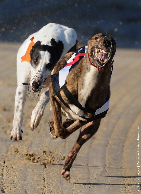 Greyhound racing