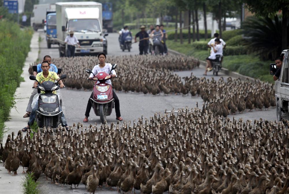 Animals Crossing