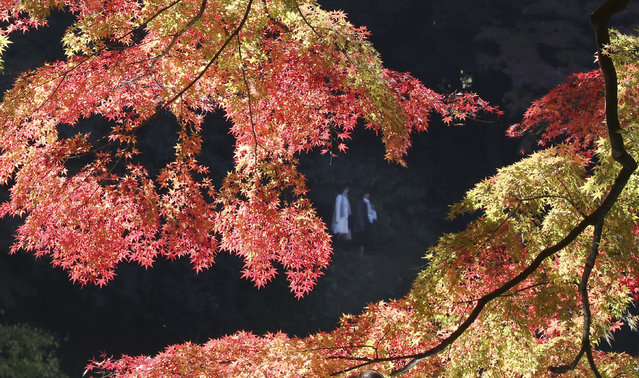 People enjoy the autumn colors at the Koishikawa Korakuen Gardens in Tokyo, Saturday, November 26, 2016. (Photo by Koji Sasahara/AP Photo)
