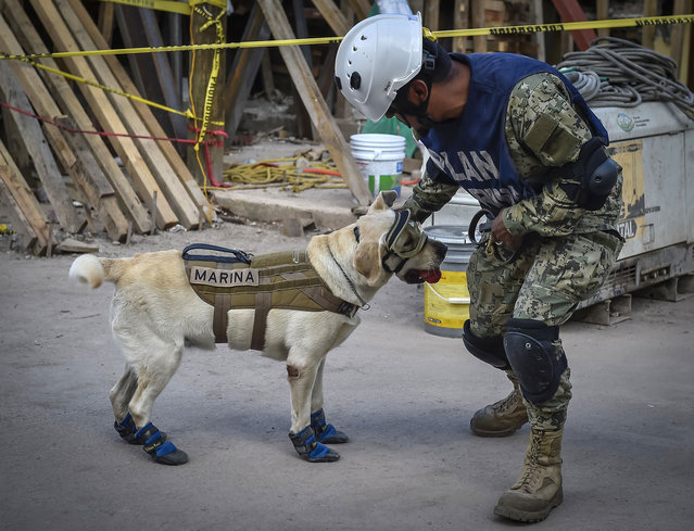 Frida, a rescue dog belonging to the Mexican Navy, with her handler Israel Arauz Salinas, takes part in the effort to look for people trapped at the Rebsamen school in Mexico City, on September 22, 2017, three days after the devastating earthquake that hit central Mexico. (Photo by Omar Torres/AFP Photo)