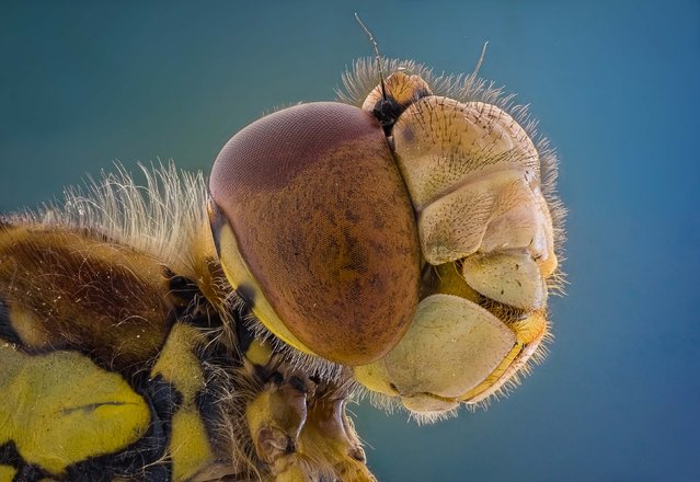 Close up of an insect. (Photo by Kutub Uddin/Caters News)