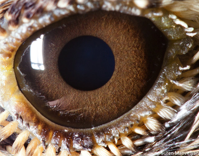 Animal Eyes by Suren Manvelyan
