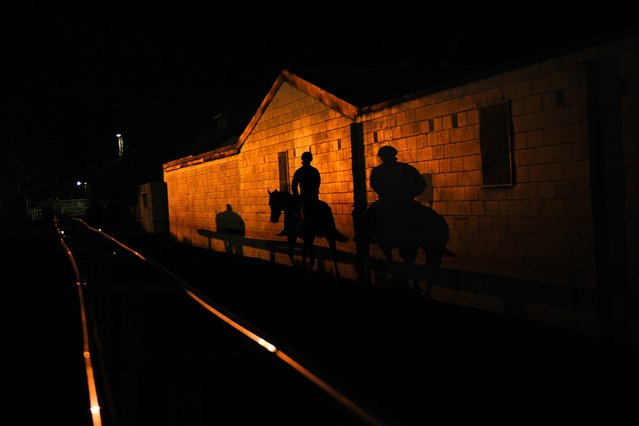 Horses make their way to the track  before a Melbourne trackwork session at Caulfield Racecourse on October 7, 2014 in Melbourne, Australia. (Photo by Vince Caligiuri/Getty Images)