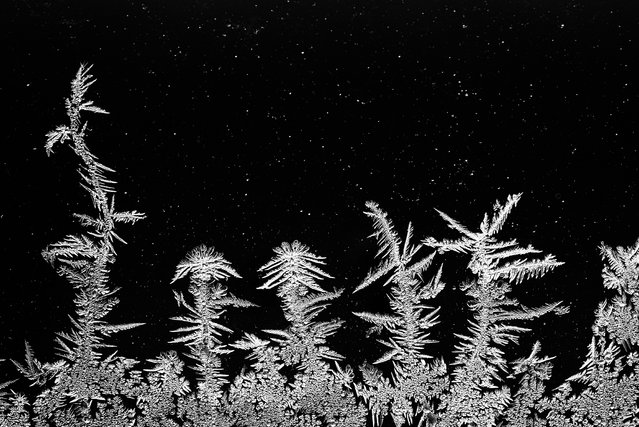 Ice crystals formed when moisture became trapped inside a faulty thermopane window. (Photo by Edwin Giesbers/Close Up Photographer of the Year 2020)