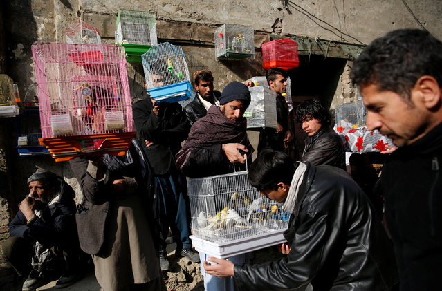 Bird vendors display canaries to buyers at Ka Faroshi bird market in Kabul, Afghanistan, January 25, 2018. (Photo by Mohammad Ismail/Reuters)