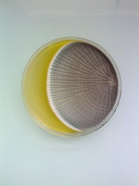 Magical Contamination By Antoine Bridier-Nahmias