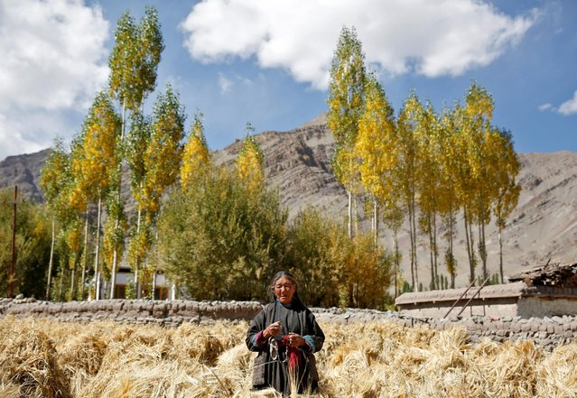"Tashi Phutit, 81, a wheat farmer and housewife poses for a photograph in the village of Stok, 15 km from Leh, the largest town in the region of Ladakh, nestled high in the Indian Himalayas, India September 27, 2016. When asked how living in the world's fastest growing major economy had affected her life, Phutit replied: ""Now we can eat better types of vegetables and we can wear better types of clothes. The problem is people are becoming greedy"". world's fastest-growing major economy that are eroding their age-old Buddhist culture but opening up new opportunities. People have long wrested a living from herding goats and tending wheat fields ringed by 6,000-m (19,685-ft) snow-capped peaks, while Buddhist monasteries dotting the landscape are a reminder of the region's ties to its eastern neighbour, Tibet. Traditions are fading fast as larger numbers of India's burgeoning middle class flock to holiday in the tranquillity of the lunar-like terrain. (Photo by Cathal McNaughton/Reuters)"