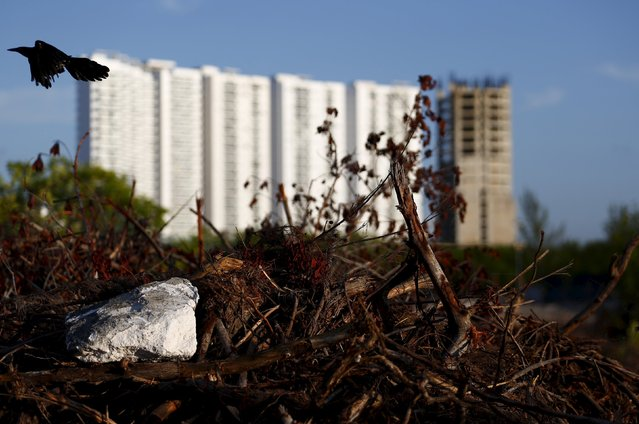 Buildings are seen behind dying plants in Cancun, August 12, 2015. (Photo by Edgard Garrido/Reuters)