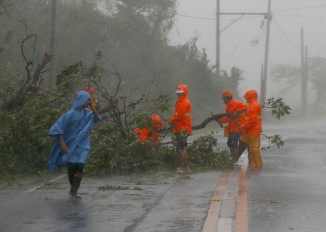 Government workers remove debris from toppled trees at the height of Super Typhoon Haima that lashed Narvacan township, Ilocos Sur province, Philippines Thursday, October 20, 2016. Super Typhoon Haima slammed into the northeastern Philippine coast late Wednesday with ferocious winds and rain that rekindled fears and memories from the catastrophe wrought by Typhoon Haiyan in 2013. (Photo by Bullit Marquez/AP Photo)