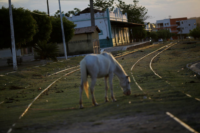 A horse grazes on railway tracks near the old train station on the the Northeast railroad (Ferrovia do Nordeste) in the city of Missao Velha, Ceara state, northeastern Brazil, October 25, 2016. (Photo by Ueslei Marcelino/Reuters)