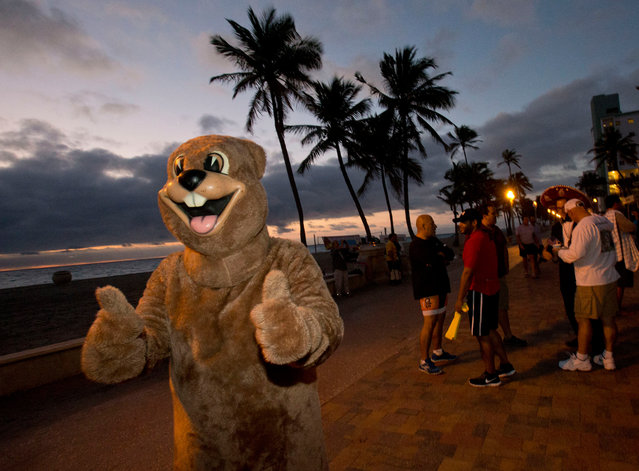 Dressed up as Punxsutawney Phil, Marty Nagy, of Hallandale Beach, Fla., gives thumbs up to passers by before the start of the 12th annual Groundhog Day on Hollywood Beach, Tuesday, February 2, 2016, in Hollywood, Fla. The event, which featured breakfast and an ocean plunge, benefited the Hollywood Beach Lifeguard Competition Team. (Photo by Wilfredo Lee/AP Photo)