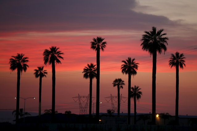 Power lines and palm trees are seen at sunset near Lost Hills, California April 20, 2015. (Photo by Lucy Nicholson/Reuters)
