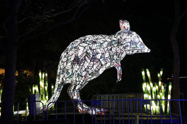 An illuminated lantern sculpture of a bilby during the media preview of Vivid Sydney at Taronga Zoo on May 19, 2019 in Sydney, Australia. (Photo by Richard Milnes/Rex Features/Shutterstock)