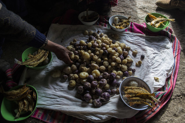 In this February3, 2017 photo, the Avila family sets their lunch of potatoes and fish on the floor of their home in Coata, a small village on the shore of Lake Titicaca, in the Puno region of Peru. Maruja Inquilla, a local environmental activist, has been visiting villagers to alert them of the dangers lurking in their food and water, in connection with contamination in the Lake Titicaca. (Photo by Rodrigo Abd/AP Photo)