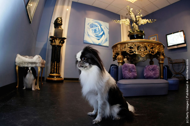 Lluxury hotel for dogs and cats in Pompano Beach, Florida