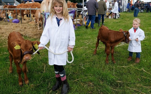 Jessie, 8 and George Barker, 3, from Kirkby Moorside hold their calves ahead of judging during the 41st North Yorkshire County Show at Camp Hill Estate on June 16, 2019 in Bedale, England. The North Yorkshire County Show is a traditional agricultural show with judging taking place for cattle, sheep, poultry, rabbit and cavy, show jumping and light horse events. Other activities at the show include a dog show, classic car display, vintage engines and tractors, farrier competition, a parade of hounds and the best dressed heavy horse. (Photo by Ian Forsyth/Getty Images)