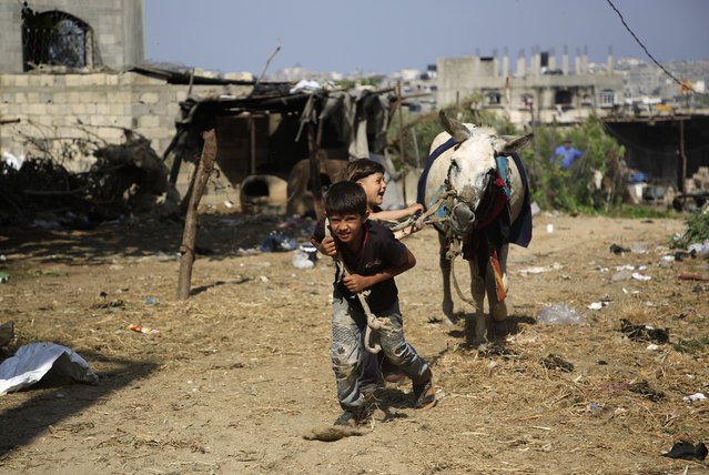 Palestinian boys play with a donkey in Beit Lahia in the northern Gaza Strip on May 29, 2019. (Photo by Mohammed Abed/AFP Photo)