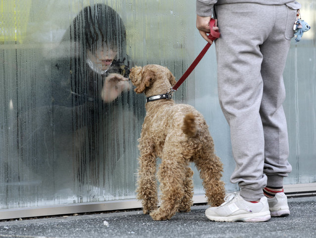 A girl who has been isolated at a makeshift facility to screen, cleanse and isolate people with high radiation levels, looks at her dog through a window in Nihonmatsu, northern Japan, March 14, 2011. (Photo by Yuriko Nakao/Reuters)