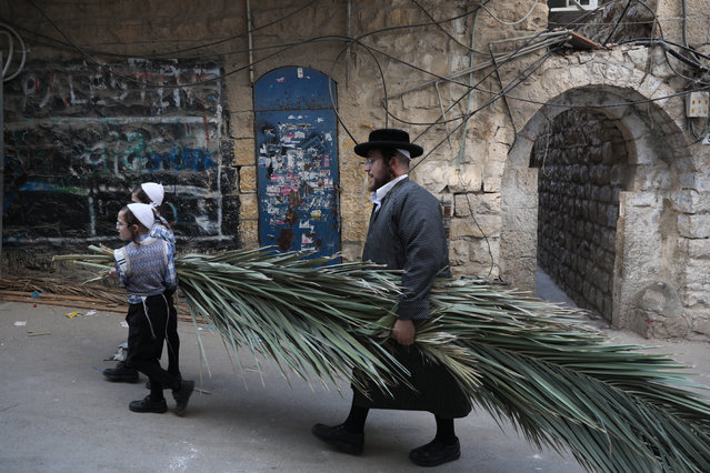An Ultra-Orthodox Jewish man carries Palm branches, used during the celebration of Sukkot, the Feast of the Tabernacles, in the Ultra-Orthodox neighbourhood of Mea Shearim, Jerusalem, Israel, 10 October 2019. The Sukkot feast begins on 13 October at sunset and end on 20 October, commemorates the exodus of Jews from Egypt some 3,200 years ago. (Photo by Abir Sultan/EPA/EFE)