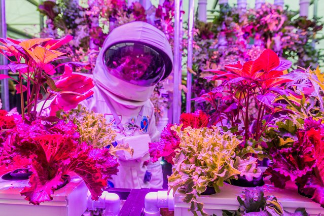 Hydroponics at RHS Chelsea Flower Show, UK, by Guy Bell. The future of food? Hydroponic plants on the Rocket Science stand are being developed for use in space and as one of the many ways to feed an ever-expanding population on Earth. (Photo by Guy Bell/2016 Atkins CIWEM Environmental Photographer of the Year)