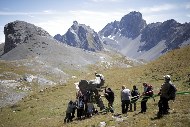 "Volunteers use ropes to push an elephant, a 200kg-replica of one of Hannibal's elephant, by French artist Luc Dubost, on the Cavalla Pass, in the Maira Valley, near Cuneo and the French border, on August 21, 2014, as part of an artistic project called ""Not for highway use"". The artist and a team of volunteers started to carry the elephant from Larche in France on August 15, 2014 in a bid to ""create a kind of a poetic remake of the strategic achievement of Hannibal"". (Photo by Marco Bertorello/AFP Photo)"