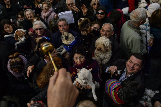 The hand of Santiago Fulero, Major priest of the Saint Pablo church, blesses people with their pets outside of the church, during the feast of St. Anthony, Spain's patron saint of animals, in Zaragoza, northern Spain, Wednesday, January17, 2018. (Photo by Alvaro Barrientos/AP Photo)