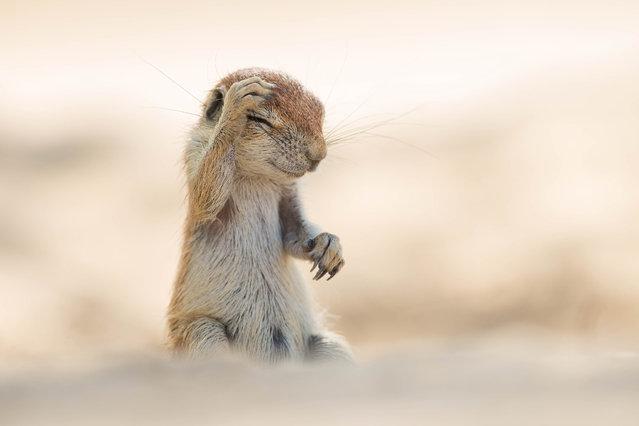 'Pants! Did i really do that last night...?'. (Photo by Yuzuru Masuda/Comedy Wildlife Photography Awards/Mercury Press)