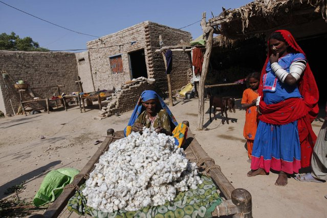 Tulsi, a cotton picker sorts out cotton blooms while sitting on a rope bed in the premises of her home in Meeran Pur village, north of Karachi November 23, 2014. (Photo by Akhtar Soomro/Reuters)