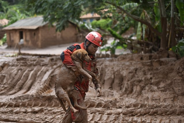 A fireman rescues in Paracatu de Baixo, Minas Gerais, Brazil on November 9, 2015 a dog that was trapped in the mud that swept through the Village of Bento Rodrigues on Thursday killing at least one person and leaving other 26 missing. The tragedy occurred Thursday when waste reservoirs at the partly Australian-owned Samarco iron ore mine burst open, unleashing a sea of muck that flattened the nearby village of Bento Rodrigues. (Photo by Douglas Magno/AFP Photo)