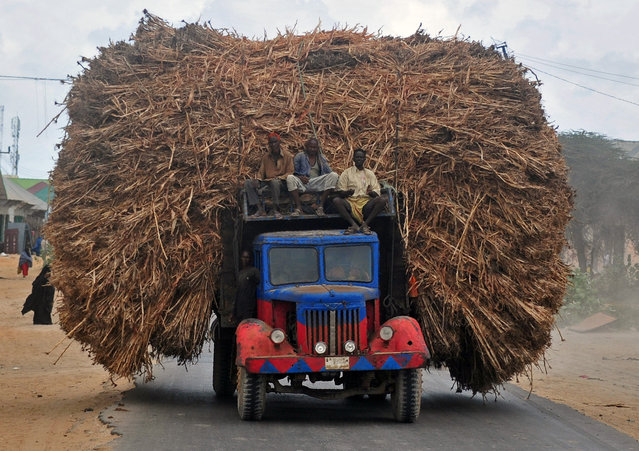 People sit on the top of a truck heavily piled with corn-stalks plies as they head for Mogadishu from Afgooye on October 19, 2016. At least four police officers were killed on October 18 when a suicide bomb attacker rammed an explosives-packed car into a police station before fighters from the Al-Qaeda-linked Shabaab group subsequently stormed the area killing at least 10 people, including soldiers and civilians. (Photo by Mohamed Abdiwahab/AFP Photo)