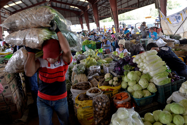 A worker carries sacks of vegetables at a vegetable market a day after Typhoon Haima hit La Trinidad, Benguet province, Philippines October 21, 2016. (Photo by Ezra Acayan/Reuters)
