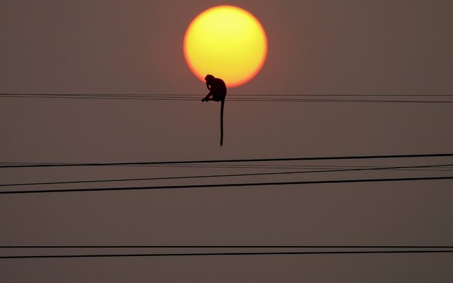 A monkey sit on a wire during sunset in front of Prang Sam Yod temple, following significant impact on tourism after the outbreak of coronavirus disease 2019 (COVID-19) spread, in Lopburi, Thailand, March 18, 2020. (Photo by Soe Zeya Tun/Reuters)