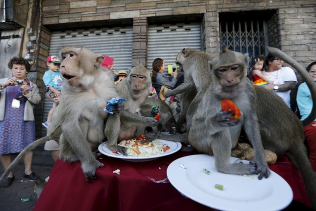 Long-tailed macaques eat fruits during the annual Monkey Buffet Festival in Lopburi, north of Bangkok November 29, 2015. (Photo by Jorge Silva/Reuters)