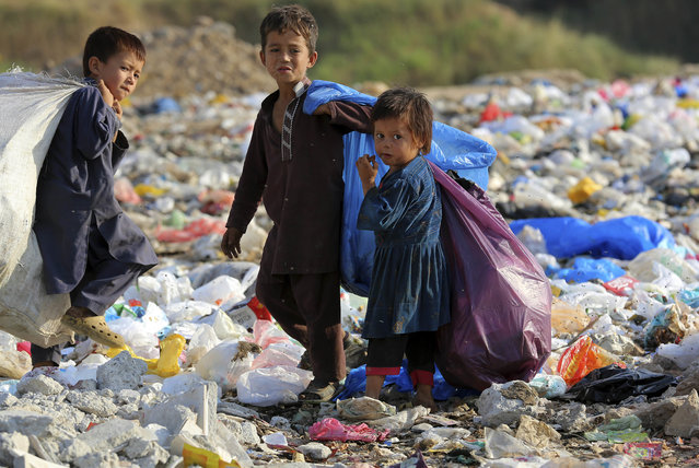 Pakistani children collect recyclable items from a garbage dumb in Islamabad, Pakistan, Monday, October 17, 2016. They work from sunrise to dusk to earn money for their families. According to Ahsan Iqbal, minister for Planning, Development and Reforms 60 million Pakistanis are living below the poverty line. (Photo by B.K. Bangash/AP Photo)