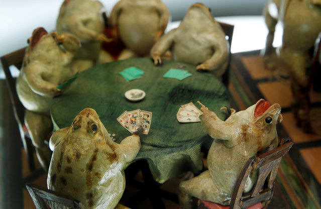 Frogs playing cards at the Frog Museum, a collection of 108 stuffed frogs in scenes portraying everyday life in the 19th-century and made by Francois Perrier, in Estavayer-le-Lac, Switzerland on November 7, 2018. (Photo by Denis Balibouse/Reuters)