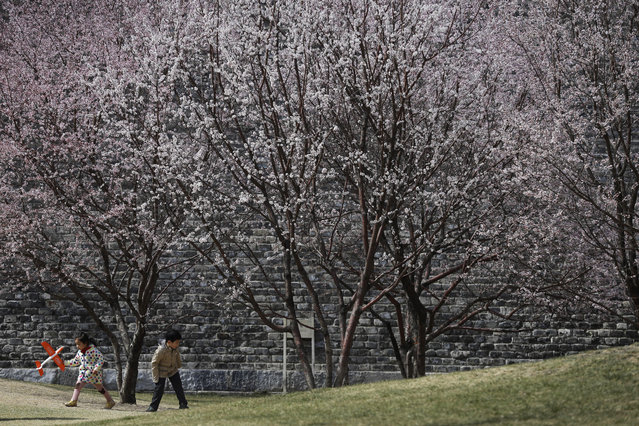 Children play under the plum blossoms which began blooming at a public park in Beijing Sunday, March 22, 2015. (Photo by Andy Wong/AP Photo)