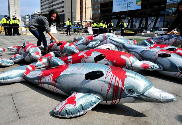 South Korean environmental activists use plastic dolphins to describe the scene of catching the sea animal in a cruel way during a demonstration in Seoul on March 20, 2014. They urged South Korean aquariums to stop importing dolphins from Japan, insisting Japanese fishermen employ cruel methods to catch the cetacean mammals. (Photo by Jung Yeon-Je/AFP Photo)