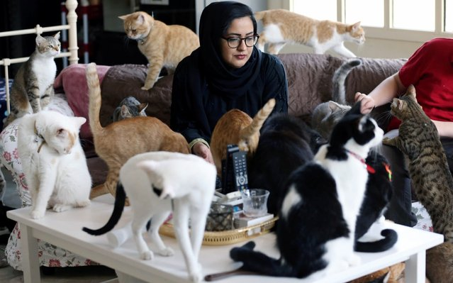 Dr. Amna Al Ahbabi who rescues stray and abandoned cats is seen at her home in Al Ain city, UAE on June 11, 2019. (Photo by Satish Kumar/Reuters)