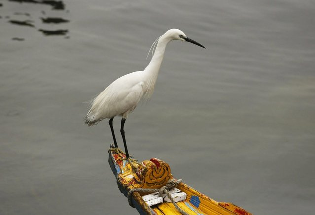 A bird takes rest on a tow-end of a Shikara (Gondola) during rains in Srinagar, the summer capital of Indian Kashmir, India, 04 May 2016. The region witnessed moderate rains bringing drop in temperature. (Photo by Farooq Khan/EPA)