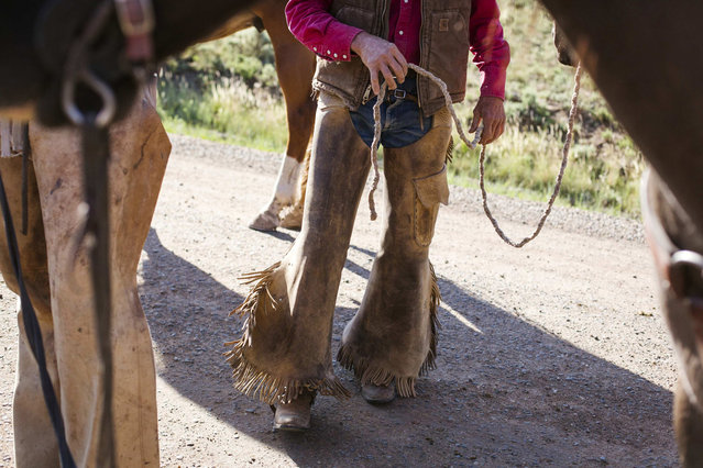 Cowboy David Thompson carries the reigns of a horse's headstall while preparing to gather cattle near Ignacio, Colorado June 10, 2014. The land where the cattle graze is leased from the Forest Service by third-generation rancher Steve Pargin. Several times a year, he and a crew led by his head cowboy, David Thompson, spend a week or more herding cattle from mountain range to mountain range to prevent them from causing damage to fragile ecosystems by staying in a single area too long. (Photo by Lucas Jackson/Reuters)