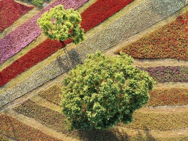 An aerial photograph shows trees among a flower garden in Beitou district in Taipei on February 6, 2020. (Photo by Sam Yeh/AFP Photo)