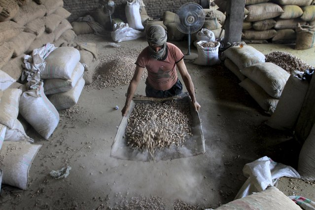 An Afghan man sorts dry fruit at a factory in Jalalabad, Afghanistan August 25, 2015. (Photo by Reuters/Parwiz)